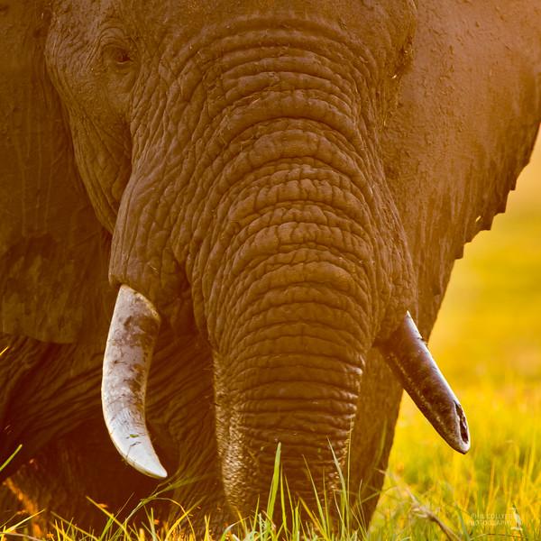 Elephant Close Encounter