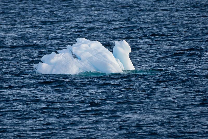 Iceberg Swan