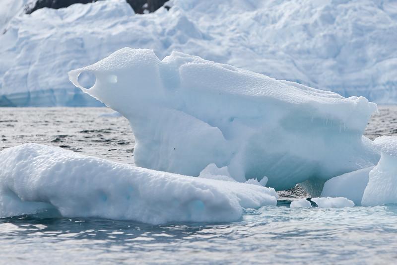 Frozen Penguin?