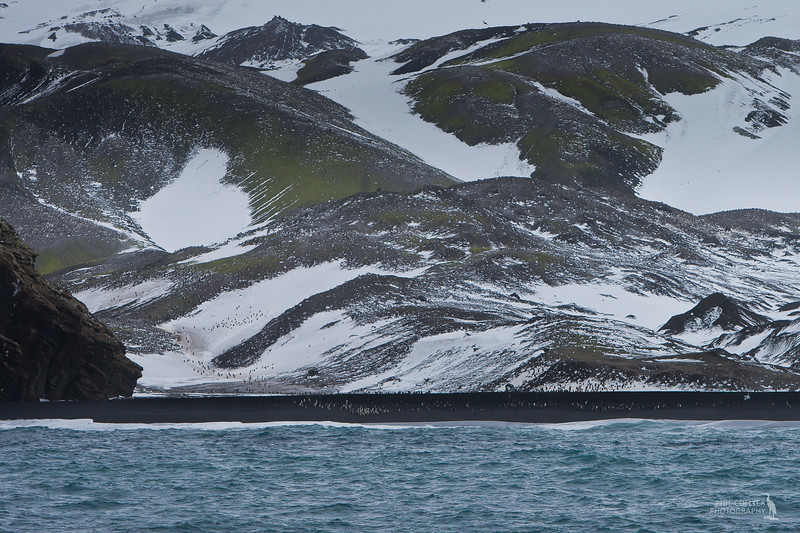 Deception Island (Chinstrap penguins)