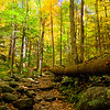Trail to Rainbow Falls
