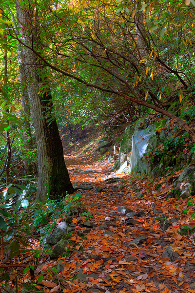 Trail to Laural Falls