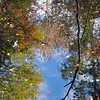 Autumn Reflections | Smamp Fox Trail, SC
