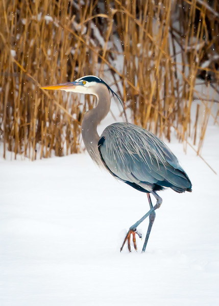 GBH Waiting for Spring