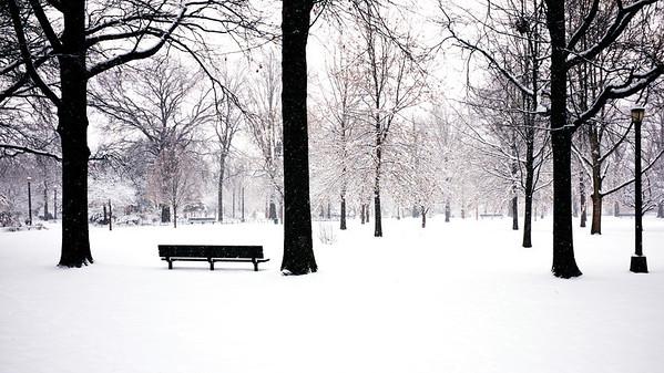 Juniper Park In Snow