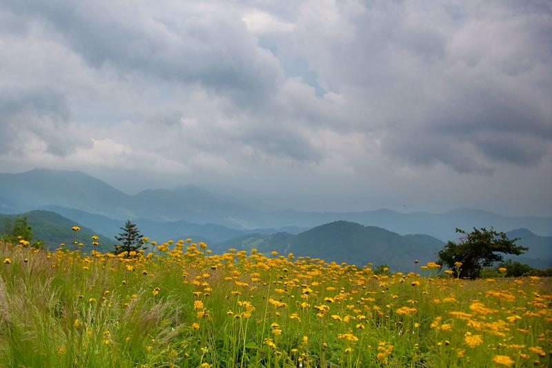 Roan Mt, TN/NC state line