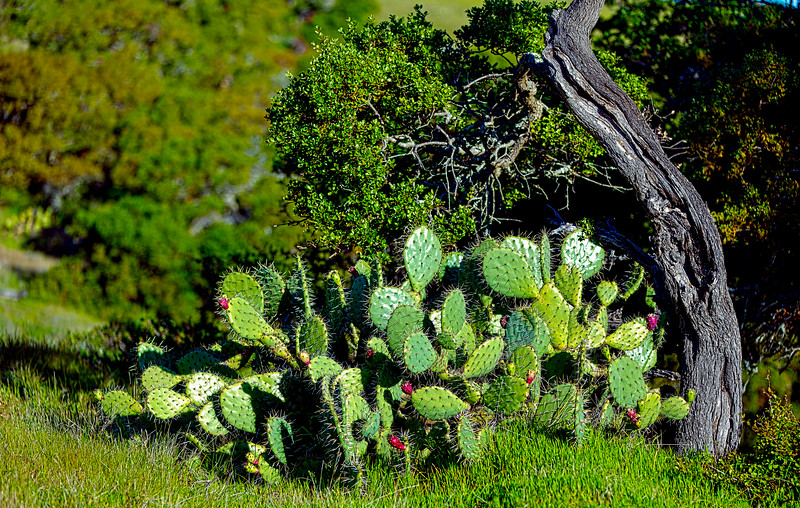 Cacti!<br /> Definition: a succulent plant with a thick, fleshy stem that typically bears spines, lacks leaves, and has brilliantly colored flowers. Cacti are native to arid regions of the New World and are cultivated elsewhere, esp. as houseplants.   :-)