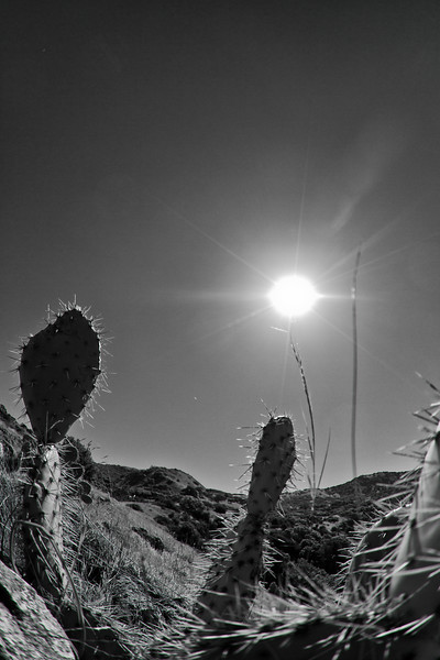 Two years ago I was on my 1st workshop trip with Marc in Utah. We stopped at an isolated place on the road. Marc apparently saw that I was struggling, trying to find somewhere to take a picture. He took my camera, and while swinging it wildly behind some cacti at the midday sun, he snapped of 15/20 frames. It was my 1st picture into the sun (against all the rules). There have been many since. It is so eerily similar to this one, I had to include it.