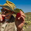 Jack, our guide, peels and cuts the Prickly Pear fruit from the cactus. It was actually OK. Kind of bitter sweet. The Indians used it as a sweetener.