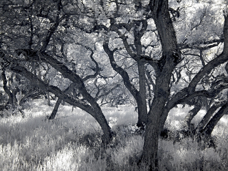 """While riding on Goat Harbor Road back to the main road, we passed the small forest. All the """"forest"""",we saw had tres like these. The look just screams for a B&W picture."""