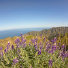 Avalon at the bottom. These wild flowers are called Lupin.