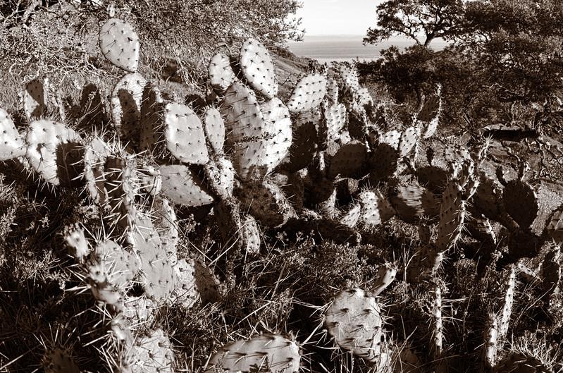 More Cacti!