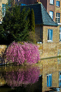 Canal Flowers