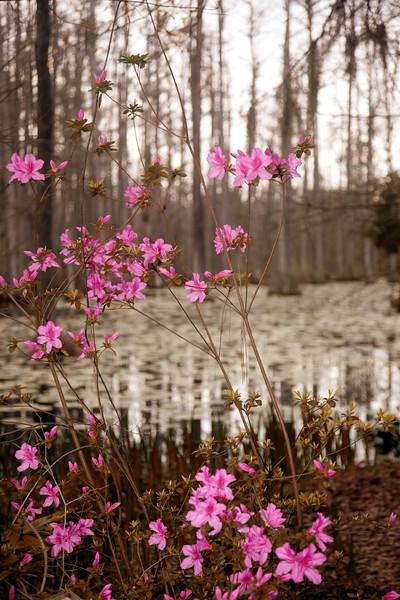 Cypress Gardens, SC