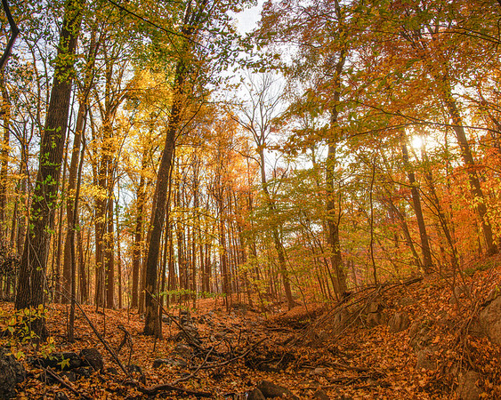Sleepy Hollow Landscapes: Witch's Spring Trail. Rockefeller State Park Preserve in Fall, Sleepy Hollow, Pleasantville, Westchester County, New York