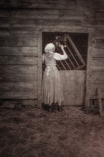 Colonial Era Daily Life: Reenactor Putting up the Sheep. Philipsburg Manor, Sleepy Hollow, North Tarrytown, Westchester County, New York