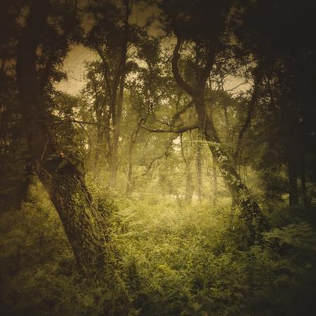 Sleepy Hollow Landscapes: Rockefeller State Park Preserve, Sleepy Hollow, Pleasantville, Westchester County, New York