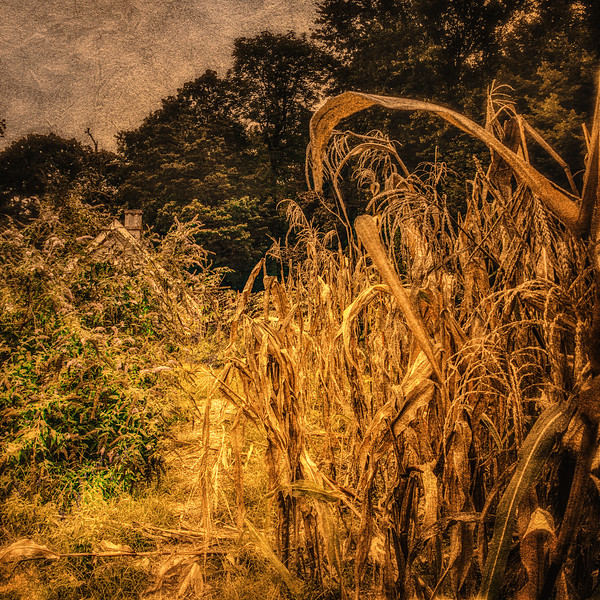 The Legend of Sleepy Hollow Setting: Corn Patch. Sunnyside, formerly Wolfert's Roost, Home of Washington Irving, Irvington, Westchester County, New York
