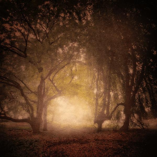 Into Sleepy Hollow, Lyndhurst, Irvington, Westchester County, New York