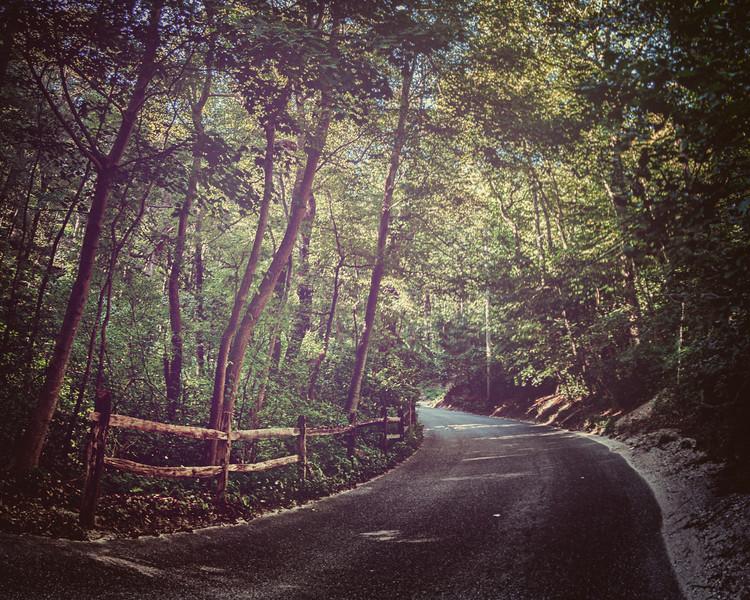Sweet Hollow Road, Near Melville, Long Island, New York