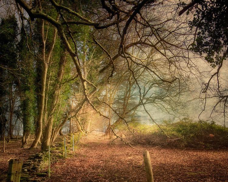 Parsonage Woods