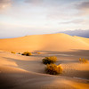 Mesquite Flat Sand Dunes...Sunrise Color