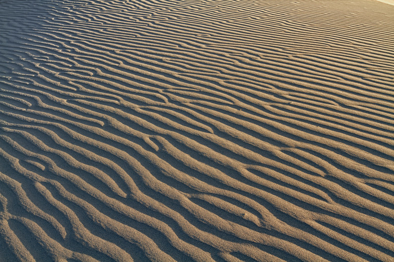 Ripples and shadows. A multitude of wildlife live just below the surface. Although the surface can get very hot, dig down just an inch or so and the sand is very cool, making life bearable for the wildlife.