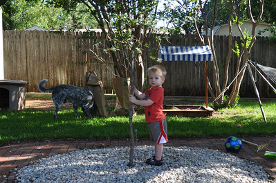 Ethan's tree two years old