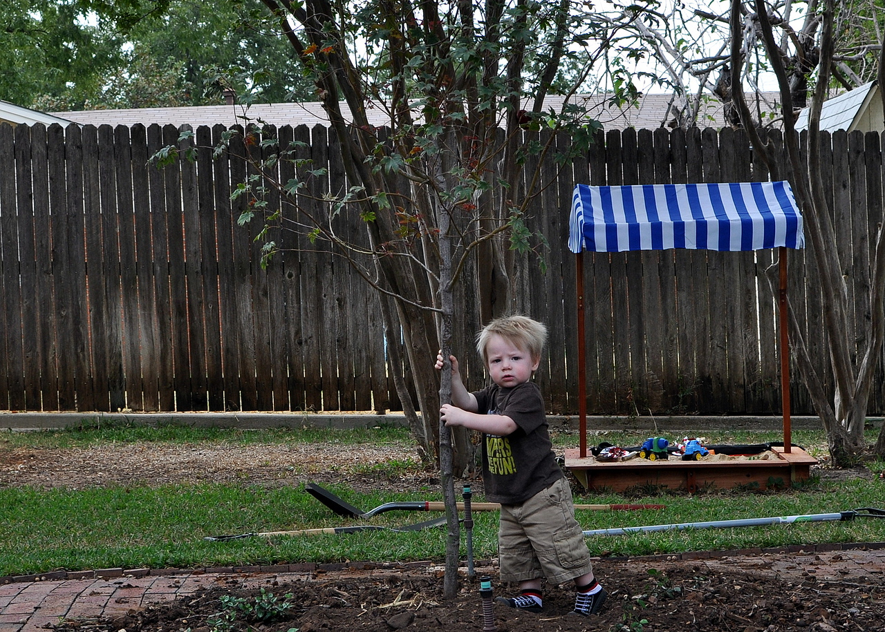 Ethan's birthday tree at one year old (first year of tree)