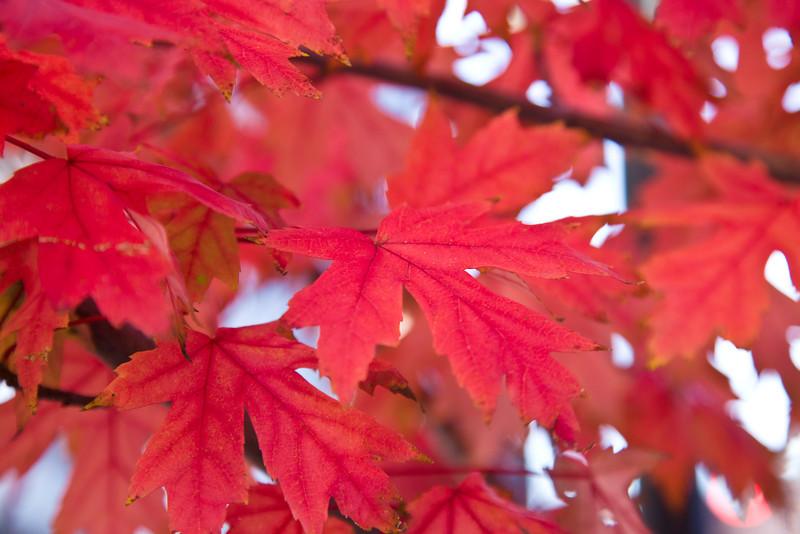 Fall in the Quapaw Quarter