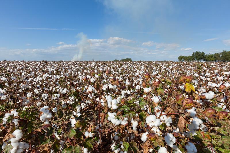 Harvest time in Arkansas
