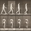 Man in pelvis cloth walking (Animal Locomotion, 1887, plate 8)