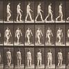 Nude woman walking (Animal Locomotion, 1887, plate 16)