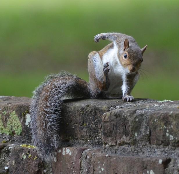 ready get set GO! squirrel