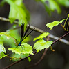 Beidler Forest Audubon Center & Sanctuary--2