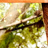 Beidler Forest Audubon Center & Sanctuary--4