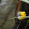 Beidler Forest Audubon Center & Sanctuary-