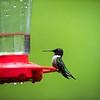 Beidler Forest Audubon Center & Sanctuary--9