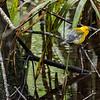 Beidler Forest Audubon Center & Sanctuary--3