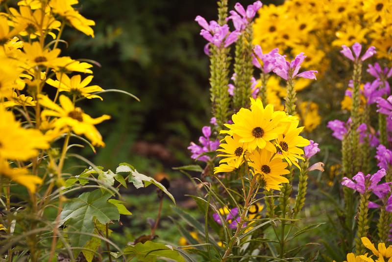 Landscaped garden at the New River Gorge Information Center