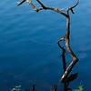 Lake_Lagunitas_Reflections