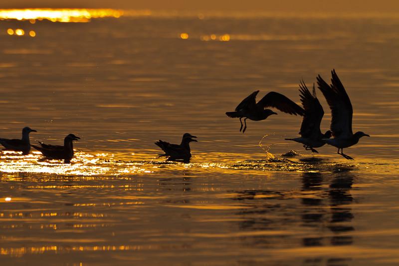Wildlife at Sea _-Edit