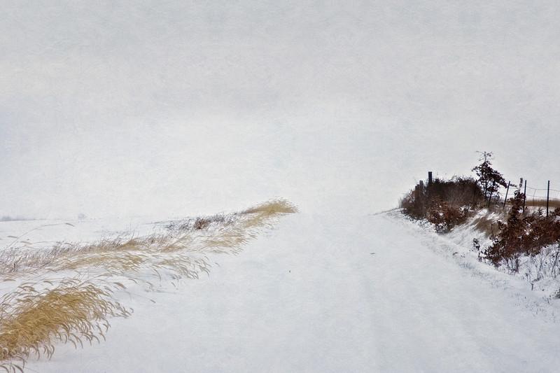 Snow Crest