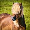 Snæfellsnes peninsula near Lýsuhóll horse rental farm._