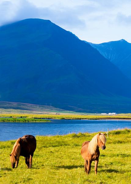 At Snæfellsnes also, location near Lýsuhóll horse rental farm._