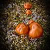 Mushroom in Lava Field
