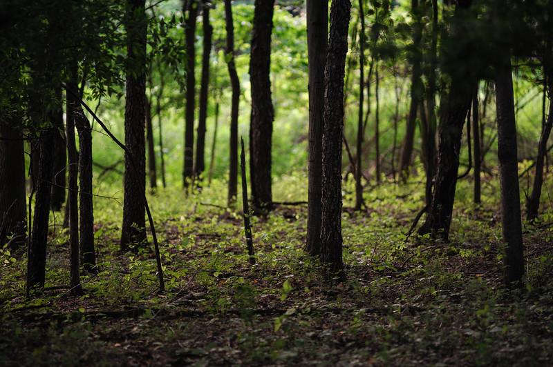 The Woods, In Focus
