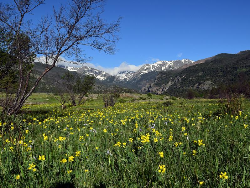 Moraine Park | Rocky Mountain National Park