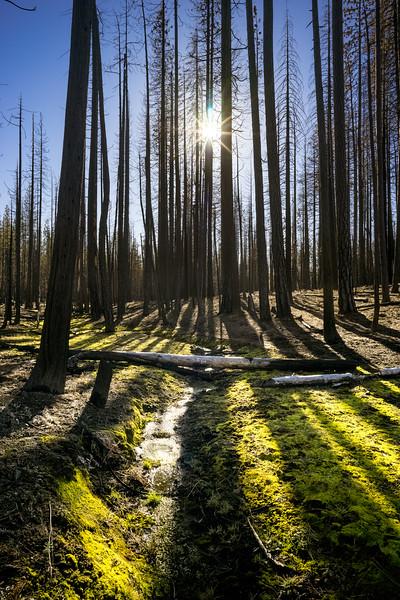Yosemite Rim Fire Aftermath
