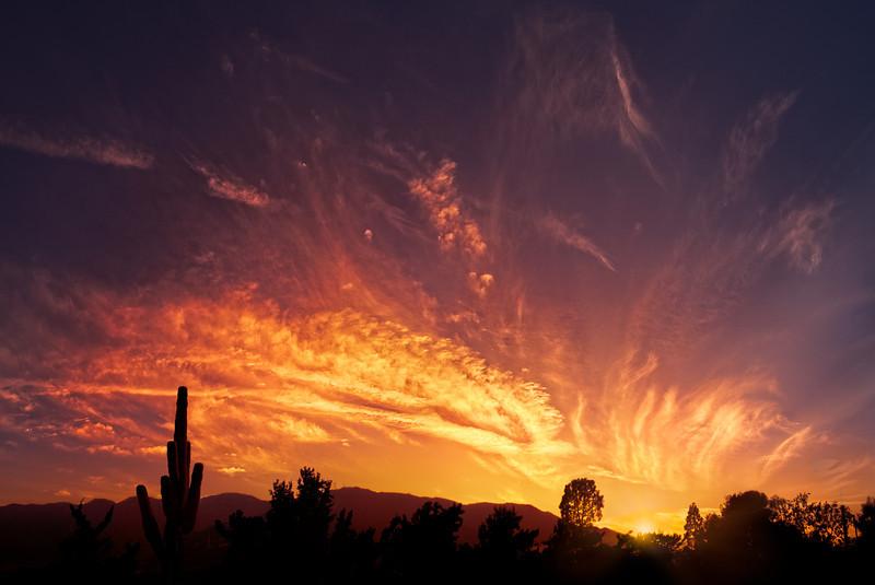 """""""Desert Night"""""""